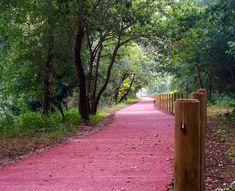 Ecopista do Rio Minho Minho, Portugal, Sidewalk, Norte, Turismo, Walkway, Pavement