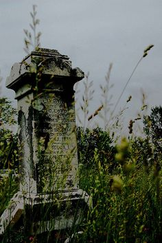 Overgrowth of an abandoned cemetery Cemetery Statues, Cemetery Headstones, Old Cemeteries, Cemetery Art, Graveyards, Abandoned Houses, Abandoned Places, Places Around The World, Around The Worlds
