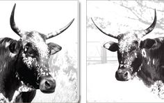 'Duo Intulo Set' Canvas Prints. R2950. Delivery is FREE to anywhere in South Africa!
