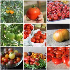 13 Best Tomato Recipes   fakefoodfree.com