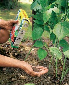 garden care tips MSG/Martin Staffler S - Natural Farming, Organic Farming, Organic Gardening, Gardening Tips, Avocado Dessert, Garden Care, Back Gardens, Outdoor Gardens, Avocado Toast