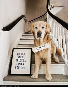 All you need is love....and a dog!