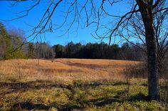 Privacy, seclusion, and lots of water are a few of the nice features this land had. Two of the property lines are creeks, there are approx. 7 acres of cleared land with the balance being wooded. Well, septic, phone, and electricity are already in place. This is an excellent tract to build your dream home, or put a camper up and enjoy the weekends at your own private retreat. #home #property #forsale #farm #landrealestate #mountainhome #newhome #househunting #land #landforsale #house #luxury