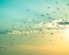 birds in flight birds flying beach photography por mylittlepixels, $25.00