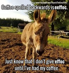 Donkey Funny, Cute Donkey, Funny Jokes, Hilarious, Funny Stuff, Hump Day Humor, Horse Riding Quotes, Twisted Humor