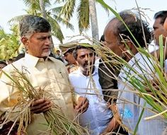 #Chandrababu to meet Thulluru #farmers today http://goo.gl/bljcQy  #Vijayawada: Telugu Desam Party leaders have made arrangements to take farmers from Thulluru mandal once again for an interaction with Chief Minister N Chandrababu Naidu on land-pooling for capital city. #Vijayawada #seemandhra #andhrapradesh #TDP