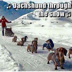 Dachshund through the snow...