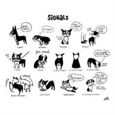 TANO Signals Poster in 2021 Dog body