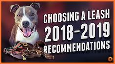 Choosing a Dog Leash - Best leashes of Puppy Training Tips, Dog Training Videos, Training Your Dog, Ian Stone, Trimming Dog Nails, Pet Organization, Choosing A Dog, Dog Leash, Dogs And Puppies
