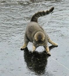 The Daily Cute: Animals On Ice!