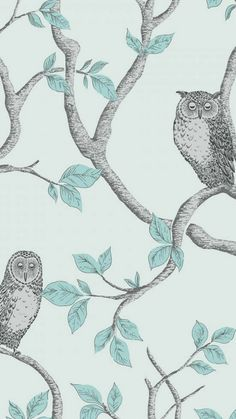 FINE DECOR Woodland Owls Wallpaper Teal and Grey. Shop similar designs at ilovewallpaper.co.uk #ilovewallpaper #Home #Butterfly #Birds #Wallpaper Blue Butterfly Wallpaper, Teal Wallpaper, Print Wallpaper, Hallway Wallpaper, Bedroom Wallpaper, Owl Wallpaper Iphone, Duck Egg Blue Bedroom, Teal Background, Beautiful Owl