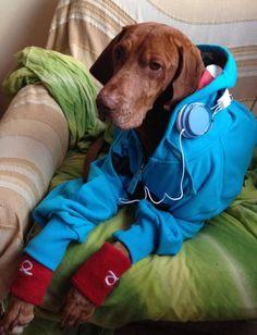 #tomcaruso #beachtennis #funny #dog