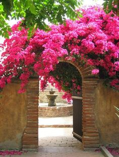Beautiful arched gateway smothered in hot pink bougainvillea...!!