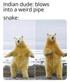 r/memes - The snake charmer is called a 'sapera' Funny Cat Jokes, Dark Humor Jokes, Funniest Hilarious Memes, Silly Memes, Top Memes, Cartoon Memes, Stupid Memes, Best Memes, Funny Humour