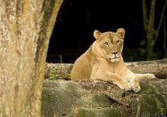 #2: Singapore Zoo – Singapore