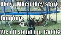 Funny Pictures, Memes, Humor & Your Daily Dose of Laughter Animal Pictures, Funny Pictures, Funny Animals, Cute Animals, Animal Funnies, Wild Animals, Animal Memes, Montage Photo, Trampolines