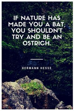 """""""If nature has made you a bat, you shouldn't try and be an ostrich.""""  A quote from the novel Demian by Hermann Hesse."""