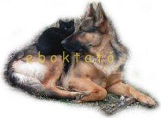 EBOKTATÓ - Kutyakiképzés-gazdioktatás - előtérben a gazdi-kutya kapcsolat.