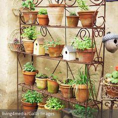 Ein Kräuterregal im Garten lässt das Potenzial der altbewährten Allheilmittel wieder neu entdecken. Nicht nur, dass Kräuter jedem Gericht das gewisse Extra…