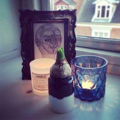 Hyacinten er i hus. Candles, Candy, Candle Sticks, Candle