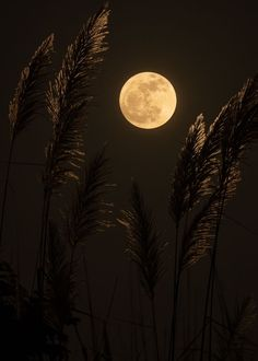 Full Moon Spells, Full Moon Ritual, Photographing The Moon, Witch Drawing, New Moon Rituals, Moon Witch, Eclectic Witch, Moon Photos, Under The Moon