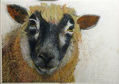 painted sheep