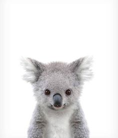 Koala print Baby animal prints Zoo animal nursery The Crown