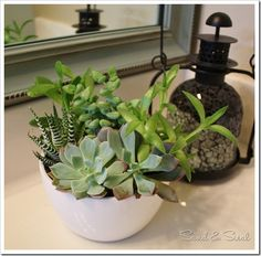 HAVE to get some succulents in the bathroom for greenery!