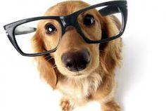 I'm smart,kibble + dog = yum yum