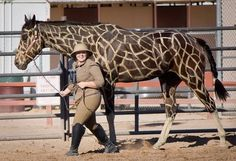 Halloween costumes for horses safari theme giraffe Horse Halloween Costumes, Halloween Costume Contest, Pet Costumes, Costume Ideas, Zombie Costumes, Halloween Couples, Family Costumes, Group Costumes, Safari Thema