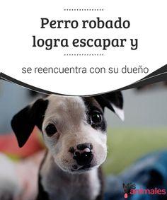 Perro robado logra escapar y se reencuentra con su dueño   Cada tanto nos sorprenden gratamente noticias que dan cuenta de algún perro robado que logra escapar de sus captores y se reencuentra con su dueño. #reencuentro #perro #dueño #curiosidades