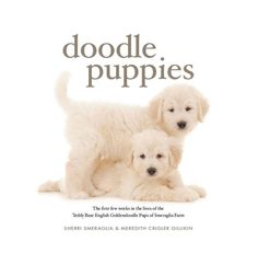 "PRE-ORDER NOW FOR HOLIDAYS!!  This beautiful photographic coffee table book is the perfect gift for anyone who has, or has had, a beloved #Goldendoodle.  Doodle Puppies -The First Few Weeks in the Lives of the Teddy Bear English Goldendoodle Puppies of Smeraglia Farm. Doodle Puppies is a beautiful 10.5"" x10.5"" 95 page photographic diary of doodles in their first few weeks if life. The price is $29.99 + shipping. Orders will begin shipping in early December 2015.  #SmagDog  #Smeraglia"