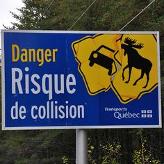 """One of many great Quebec, Canada official road signs: """"Danger: risk of collision"""". Given that a moose can weigh almost as much as a car, this is official business."""