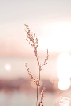 Tout en d licatesse iphone hintergrundbilder hintergrundbilder Tout en d licatesse iphone hintergrundbilder hintergrundbilder Blumen Blumen hintergrundbilder Tout en d licatesse nbsp hellip malen aquarell Rose Gold Wallpaper, Pastel Wallpaper, Flower Wallpaper, Nature Wallpaper, Wallpaper Backgrounds, Beautiful Wallpaper, Trendy Wallpaper, Autumn Iphone Wallpaper, Glitter Wallpaper