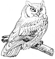 free Screech Owl coloring page