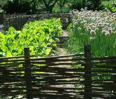 Planera din trädgård 2 - förutsättningar | Odla.nu Willow Fence, Big Garden, Edible Garden, Raised Garden Beds, Aquaponics, Plein Air, Pathways, Vegetable Garden, Beautiful Gardens