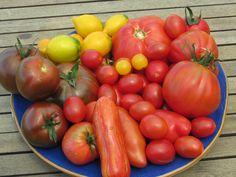 insalataMente:   Pomodori dal mio orto  Tomatoes from my garden