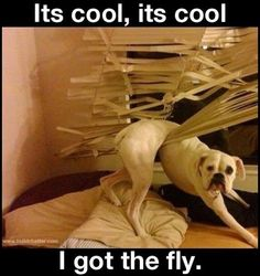 Yep, he got the fly. This is what Waylon did.