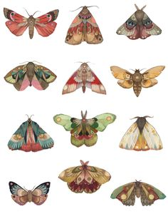 Printing up a fresh batch of moth prints today! All 12 days on one print -. - Carola : Printing up a fresh batch of moth prints today! All 12 days on one print -. Kunst Inspo, Art Inspo, Art And Illustration, Butterfly Illustration, Art Reference, Art Drawings, Pencil Drawings, Art Projects, Art Photography