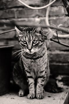 """""""If homeless cats could talk, they would probably say, give me shelter, food, companionship, love, and I'll be yours for life."""" --Susan Easterly"""