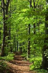 Stressed Out? Visit a Forest