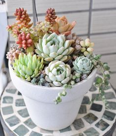 Succulents. More