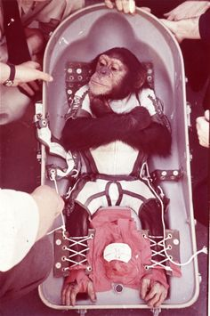 ham the space monkey -monkey history