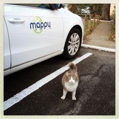 La MappyCar et le chat
