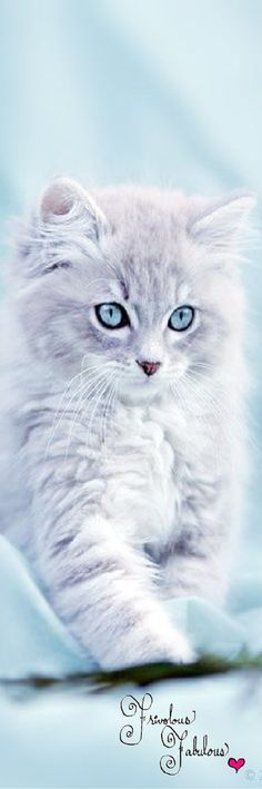 H- Hi there... I am Willoekit. I am 5 12 moons old and I want to train to become a medicine cat alongside Ice Scorch. I am clumsy, shy, and I often forget things, although with herbs it is different. I was the only surviving kit of PoppyLeaf's litter. I do not like being the center of attention.