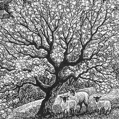Wood engraving artist Sue Scullard portfolio of prints she is based in Kent, UK Linocut Prints, Art Prints, Woodcut Art, Art Journal Techniques, Drawing Techniques, Wood Craft Patterns, Scratchboard, Wood Engraving, Elements Of Art