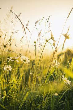 I remember my childhood names for grasses and secret flowers. I remember where a toad may live and what time the birds awaken in the summer -- and what trees and seasons smelled like -- how people looked and walked and smelled even. The memory of odors is very rich. ~John Steinbeck