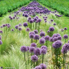 Un château qui fait renaître l'imaginaire des contes de fées... - Le JardinOscope, toute la flore et la faune de nos parcs et jardins