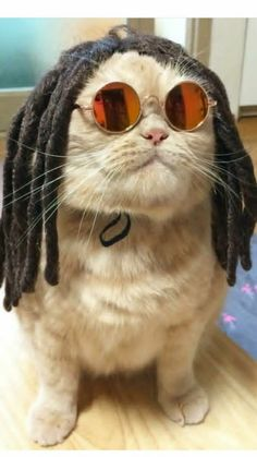 Funny pictures – September 2017 - Cats and Dogs House Cute Funny Animals, Funny Animal Pictures, Cute Baby Animals, Funny Cute, Cute Dogs, Gif Pictures, I Love Cats, Crazy Cats, Cool Cats