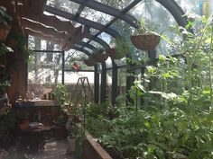 Inside the Greenhouse, made from an older solarium, 10 x 22ft.